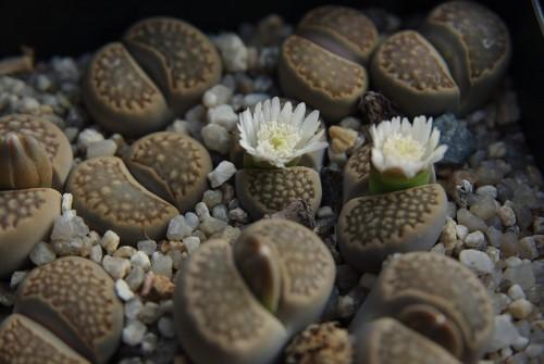 Mes petites plantes grasses et cactées - Page 6 94959881-origpic-aaed96