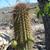 Cleistocactus tominense MN 648