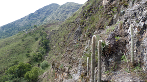 Cleistocactus hyalacanthus MN 0489 (1 km E of Santa Elena, 2239, Chuquisaca, Bolivia)