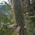 Cleistocactus micropetalus MN 0529 (Est. Tacaruandi - Est. Ca–adas, W Palos Blancos, 1124, Tarija, Bolivia)